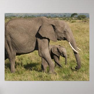 アフリカゾウおよび幼いこども(Loxodontaのafricana)、 ポスター