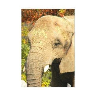 アフリカゾウのキャンバスの芸術 キャンバスプリント