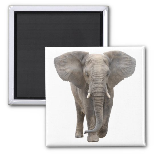 アフリカゾウの四角いマグネット,No.01 マグネット
