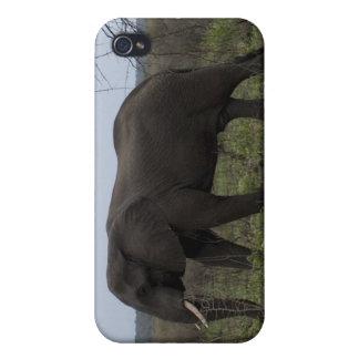 アフリカゾウの野性生物のiPhoneの場合 iPhone 4 ケース