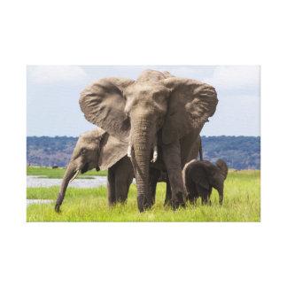 アフリカゾウ家族、ボツワナのキャンバスのプリント キャンバスプリント