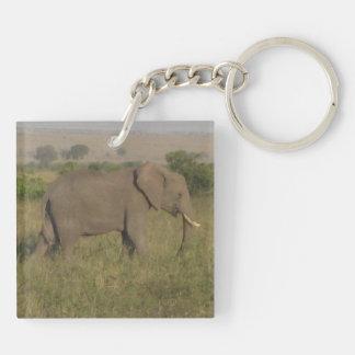アフリカゾウ キーホルダー