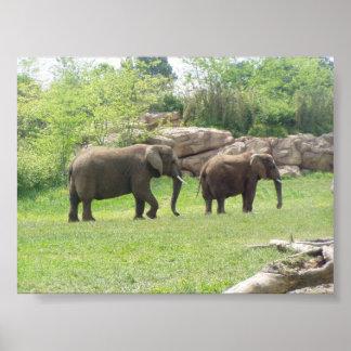 アフリカゾウ ポスター