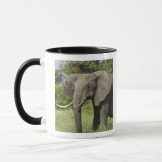 アフリカゾウ、マサイ語マラ、ケニヤ。 Loxodonta マグカップ