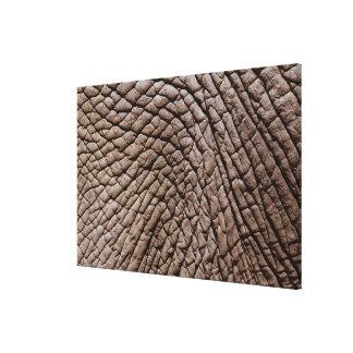 アフリカゾウ(Loxodontaのafricana)の皮 キャンバスプリント