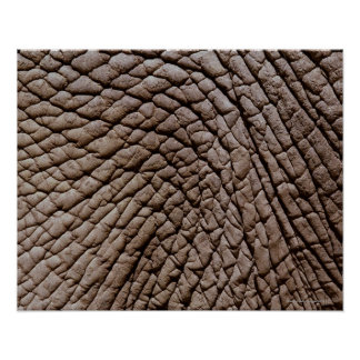 アフリカゾウ(Loxodontaのafricana)の皮 ポスター