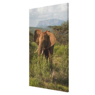 アフリカゾウ、SamburuのLoxodontaのafricana、 キャンバスプリント
