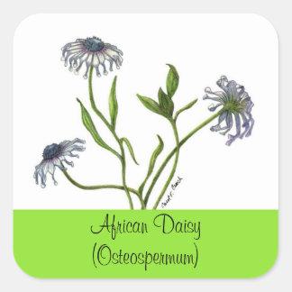 アフリカデイジーの植物のシール スクエアシール