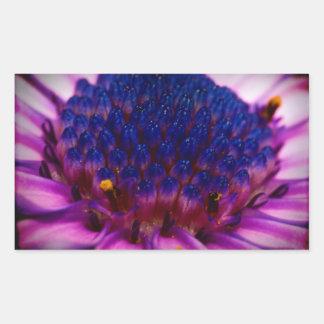 アフリカデイジーの花の長方形のステッカー 長方形シール