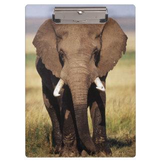 アフリカ人のブッシュ象 クリップボード