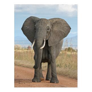 アフリカ人のブッシュ象 ポストカード