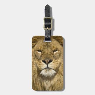 アフリカ人のBarbaryのライオン、ヒョウ属レオレオ、者の ラゲッジタグ