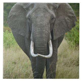 アフリカ人のElephantnaのloxodonta、マサイ族のマラのゲーム タイル