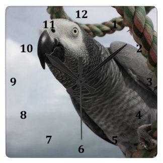 アフリカ灰色のオウムのクローズアップの柱時計 スクエア壁時計