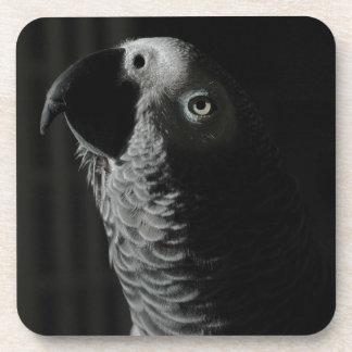 アフリカ灰色のオウム コースター