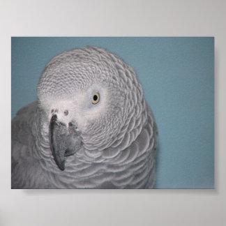 アフリカ灰色のオウム ポスター