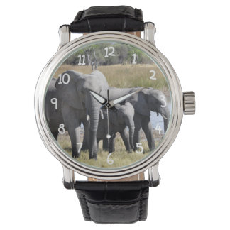 アフリカ象の群れ ウオッチ