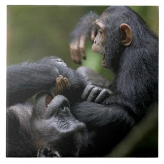 アフリカ、ウガンダの年少Kibaleの森林予備 タイル