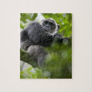 アフリカ、ウガンダのKibaleの森林予備、ポートレート2 ジグソーパズル
