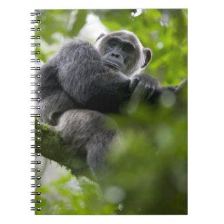 アフリカ、ウガンダのKibaleの森林予備、ポートレート2 ノートブック