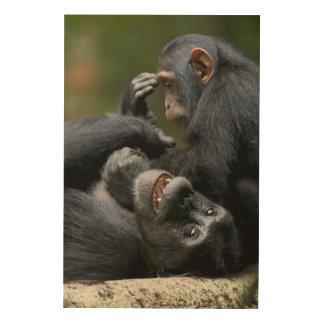 アフリカ、ウガンダのKibaleの森林予備、未成年者2 ウッドウォールアート