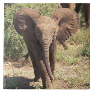 アフリカ、ケニヤのAmboseliの国立公園。 アフリカ人2 タイル