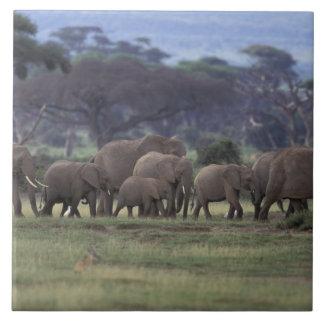 アフリカ、ケニヤのAmboseliの国立公園。 アフリカ人3 タイル