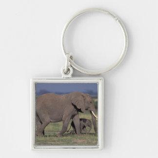 アフリカ、ケニヤのAmboseliの国立公園。 アフリカ人4 キーホルダー