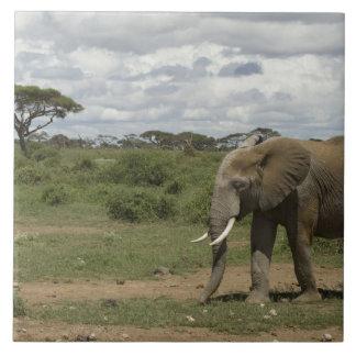 アフリカ、ケニヤのAmboseliの国立公園、象、 タイル
