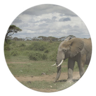 アフリカ、ケニヤのAmboseliの国立公園、象、 パーティープレート