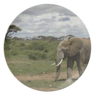 アフリカ、ケニヤのAmboseliの国立公園、象、 プレート