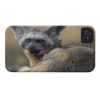 アフリカ、ケニヤ、マサイ族のマラのゲームの予備、こうもり Case-Mate iPhone 4 ケース