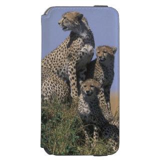 アフリカ、ケニヤ、マサイ族のマラのゲームの予備、大人4 INCIPIO WATSON™ iPhone 6 財布ケース