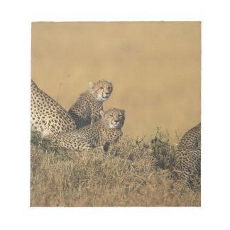 アフリカ、ケニヤ、マサイ族のマラのゲームの予備、大人5 ノートパッド