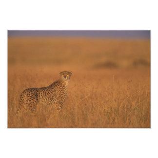 アフリカ、ケニヤ、マサイ族のマラのゲームの予備、大人 フォトプリント