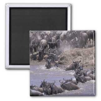 アフリカ、ケニヤ、マサイ族のマラの国立公園 マグネット