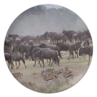 アフリカ、ケニヤ、マサイ語マラ。 ガゼルの群れ、 プレート