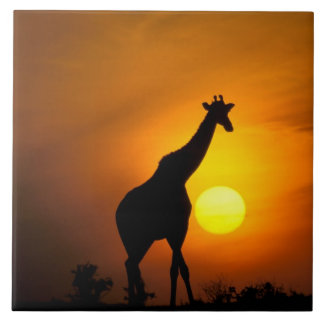 アフリカ、ケニヤ、マサイ語マラ。 キリン(キリン タイル