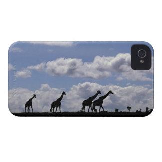 アフリカ、ケニヤ、マサイ語マラ。 キリン(Giraffa Case-Mate iPhone 4 ケース