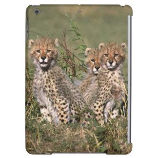 アフリカ; ケニヤ; マサイ語マラ; 3匹のチータの幼いこども