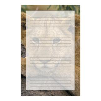 アフリカ、ケニヤ。 ライオンのポートレート 便箋