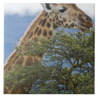 アフリカ。 ケニヤ。 湖のRothschildのキリン タイル