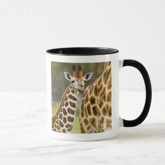 アフリカ。 ケニヤ。 2のRothschildのキリンのベビー マグカップ