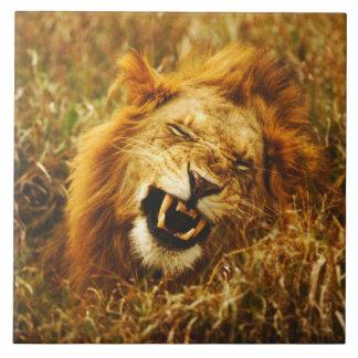 アフリカ、ケニヤ、Maasaiマラ。 オスのライオン。 野生 タイル