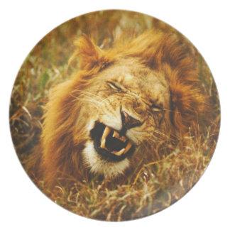 アフリカ、ケニヤ、Maasaiマラ。 オスのライオン。 野生 プレート