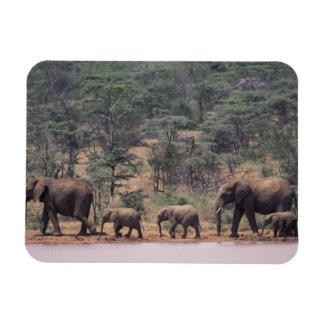 アフリカ、ケニヤ、Nanyuki、Mpala。 アフリカ マグネット