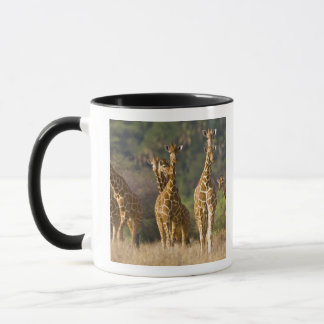 アフリカ。 ケニヤ。 Reticulatedキリンの群れの マグカップ