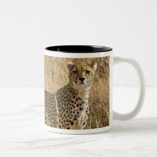 アフリカ。 ケニヤ。 Samburu NPのチータ。 2 ツートーンマグカップ