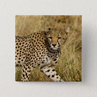 アフリカ。 ケニヤ。 Samburu NPのチータ。 3 5.1cm 正方形バッジ