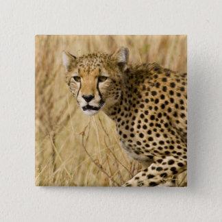 アフリカ。 ケニヤ。 Samburu NP.のチータ 5.1cm 正方形バッジ